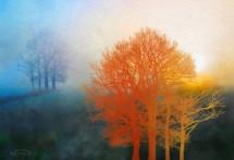 תמונה של הסתיו הזהוב | תמונות