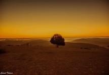 תמונה של עץ בדימדומים | תמונות