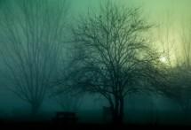 תמונה של עץ בזריחה   תמונות