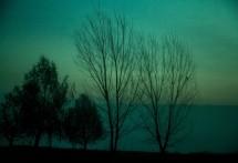 תמונה של צבעים של בוקר | תמונות