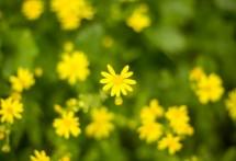 תמונה של Yellow Flower | תמונות