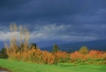 תמונה של חורף ציבעוני | תמונות