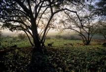 תמונה של עצים | תמונות