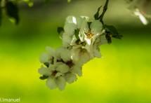 תמונה של לבן על רקע ירוק   תמונות