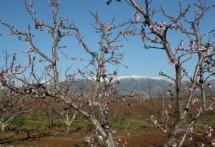תמונה של אביב בלב   תמונות