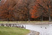 תמונה של על גדות אגם   תמונות