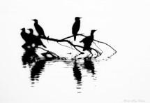 תמונה של together -black and white | תמונות