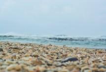 תמונה של צדפים בחוף | תמונות