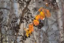 תמונה של כתום בעץ | תמונות