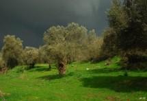 תמונה של לפני הסערה | תמונות