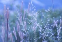 תמונה של שלווה | תמונות