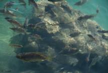 תמונה של דגים | תמונות