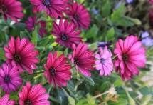 תמונה של פרחים בגינה   תמונות