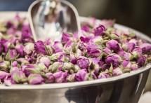 תמונה של ניצני ורד | תמונות