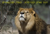 תמונה של אריה | תמונות