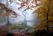 תמונה של יער ויטושה | תמונות