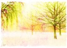 תמונה של יער צהוב | תמונות