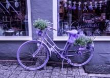 תמונה של bicycle | תמונות