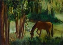 תמונה של סוס | תמונות