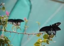 תמונה של בזוג על הענפים | תמונות