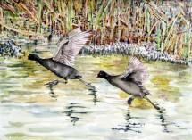 תמונה של שתי ציפורים על נהר הירדן | תמונות