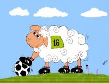 תמונה של הכבש ה-16   תמונות