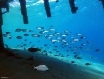 תמונה של דגי זכוכית מתחת לגשר  | תמונות