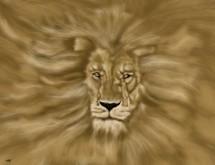 תמונה של אריה   תמונות