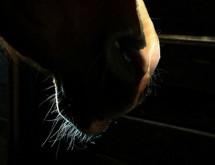תמונה של זקן סוס | תמונות