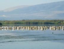 תמונה של שקנאים באגם | תמונות