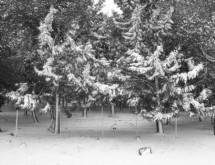 תמונה של ענפים לבנים   תמונות