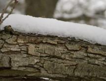 תמונה של גזע עץ | תמונות