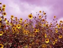 תמונה של צהובים | תמונות