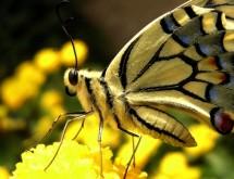 תמונה של צהוב | תמונות