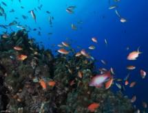 תמונה של צבעוני ודגים  | תמונות