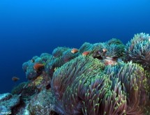 תמונה של שדה שושנות ים  | תמונות