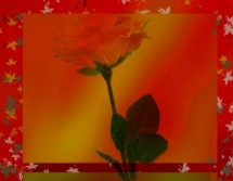 תמונה של ורד עם עלים   תמונות