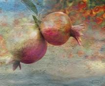 תמונה של Pomegranates | תמונות