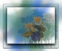 תמונה של פרחים במסגרת | תמונות
