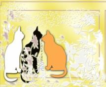 תמונה של חתולים | תמונות