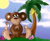 תמונה של Monkey | תמונות