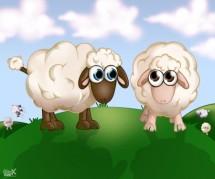 תמונה של כבשים על גבעה   תמונות