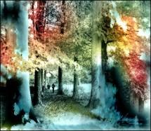 תמונה של בין העצים | תמונות