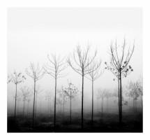 תמונה של foggy day | תמונות