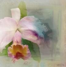 תמונה של Orchid | תמונות