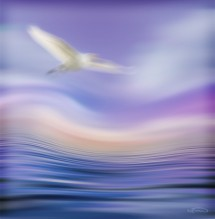 תמונה של מעוף | תמונות