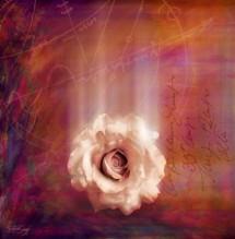 תמונה של Mystic Rose | תמונות