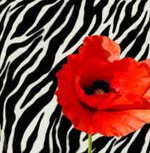 תמונה של אדום-שחור-לבן | תמונות