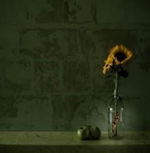 תמונה של אישה וחמניה | תמונות
