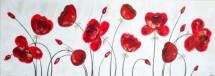 תמונה של כלניות אדומות | תמונות